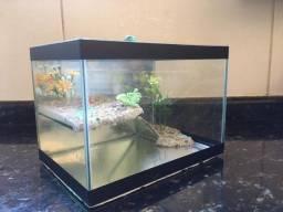 Aquario para peixes pequenos