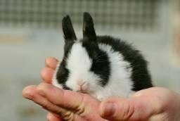 Quero adotar um coelho porte pequeno