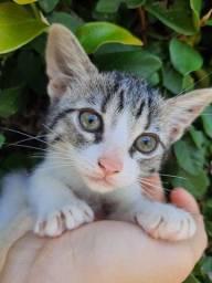 Doção de gatinha