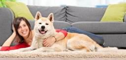 Aprenda a adestrar o seu cão - Passo a Passo
