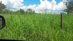 Procuro pastos pra arrendar em Araguaçu