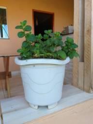 Hortelã - Cebolinha no Vaso
