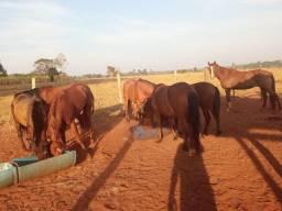 Cavalos/Ribas do Rio Pardo