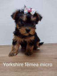 Yorkshire terrier Imperdiveis