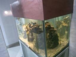 Vendo aquário completo com aquecedor e filtro