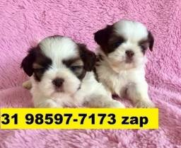 Canil Cães Filhotes Top BH Shihtzu Beagle Lhasa Maltês Yorkshire Pug Bulldog Spitz
