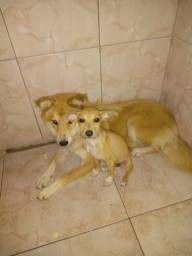 Doace 3 cachorras duas viralatas e uma de raça