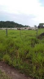 Fazenda 400Ha Serra São Vicente