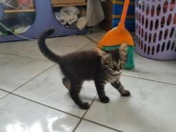 Adoção de filhote de gato fêmea