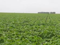 Fazenda Agrícola Goioxim-PR