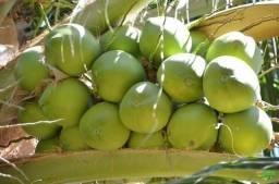 Côco Verde entrega em Campos e São Francisco de Itabapoana