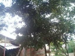 Vendo casa no município de autazes
