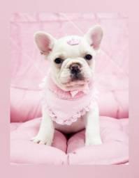 Filhote de bulldog francês fêmea de excelente linhagem - Com Microchip