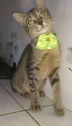 Adoção Gata Castrada