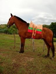 Vendo cavalo recém amassado 4 anos