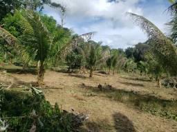 Terreno km 10 Estrada Novo Airão