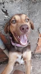 Doa-se cachorro super dócil e brincalhão