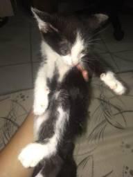 Estou doando gatinho macho vermifugado