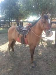 Vendo cavalo de 4 anos