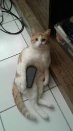 Gato técnico em telefonia para adoção