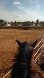 URGENTE!!!! Cavalo