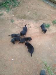 Cachorrinhos para adoção
