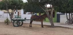 Charrete com 01 Burro  - ZAP 75. * Rogério