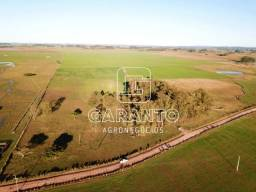 125,8 hectares