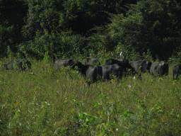 Fazenda espetacular no Pantanal de Poconé-MT Com acesso (estuda permuta)