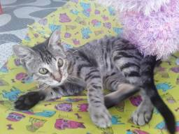 Doação linda gatinha tigradinha castradinha 5 meses