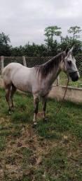 Cavalo mestiço de QM