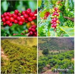 Sítio com 40 mil metros 2 mil pes de cafe 4 hectares chácara terreno
