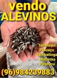 Vendo alevinos de peixe