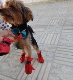 sapato pra cachorro