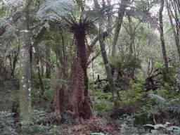 Area de 4,5 hectares em Cambará do Sul ,RS