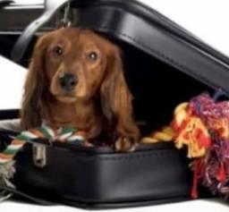 Hospedagem * lar temporário * dog walker