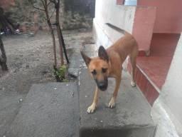 Doação de cachorra