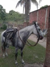 Cavalo tordilho 2500 hoje.