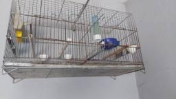 Gaiola com repartição ideal pra reprodução de canario