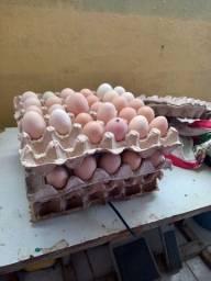Vendo ovos galados caipirao