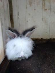 Estou vendendo uma coelha