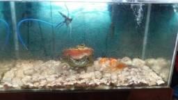 Vendo aquário bonito e completo 300