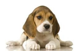 Beagle 13 polegadas com todas as garantias parcelamos 12x e entregamos hoje