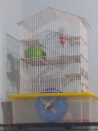 Gaiola e hamster