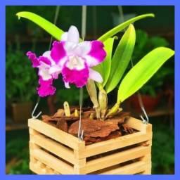 As Orquídeas São Capazes de Transformar Ainda Mais Qualquer Ambiente