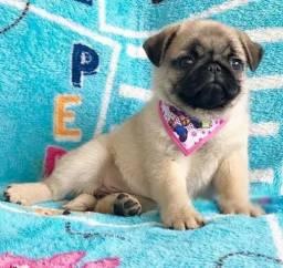 Pug Fêmea disponível pra entrega