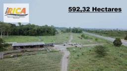 Fazenda a venda no município de Rio Crespo com 595,32 hectares-Cód FA0069
