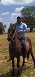 Troca por burro ou mula