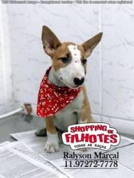 Bull Terrier, filhotes c/ assistência em 12 clínicas veterinárias próprias!