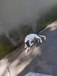 ?cachorro 3 meses..sem condições d criar em apartamento